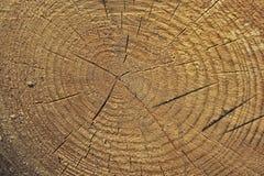 Świeży drzewnego fiszorka rżnięty tło lub tekstura Zdjęcie Royalty Free