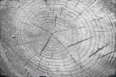 Świeży drzewnego fiszorka rżnięty tło lub tekstura czarny white Obraz Stock