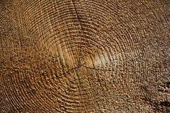 Świeży drzewo od Czeskiego lasu jako tło Zdjęcia Stock