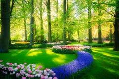 Świeży gazon z kwiatami obraz stock