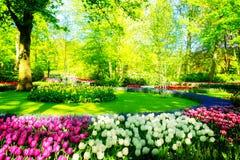 Świeży gazon z kwiatami obrazy stock