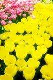 Świeży gazon z kwiatami fotografia royalty free