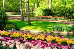 Świeży gazon z kwiatami obraz royalty free