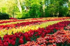 Świeży gazon z kwiatami fotografia stock