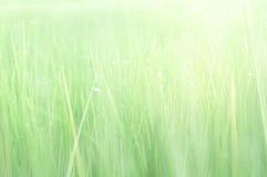 Świeży glasslands i bokeh dla tła, wietrzny pojęcie zdjęcie stock