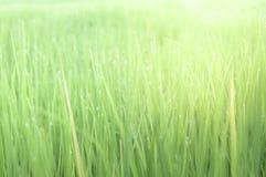 Świeży glasslands i bokeh dla tła, wietrzny pojęcie obraz royalty free