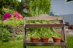 Świeży herbage w garnkach Obrazy Stock