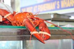 Świeży homar dla sprzedaży przy plenerowym rynkiem Fotografia Stock
