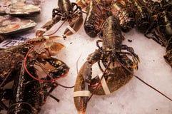 Świeży homar przy Boqueria rynkiem w Barcelona, Hiszpania Obraz Royalty Free