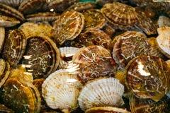 Świeży i życie Japoński przegrzebków hotategai w wodzie przy rybim rynkiem w Sapporo Hokkaido, Japonia fotografia stock