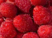 Świeży i słodki czerwonych malinek tekstury tło fotografia royalty free