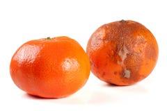 Świeży i uszkadzający tangerine odizolowywający na białym tle Zdjęcie Stock