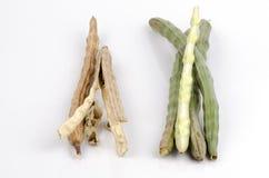 Świeży i wysuszony Horseradish drzewo, Drumstick (Moringa oleifera zwianie.). Zdjęcia Royalty Free