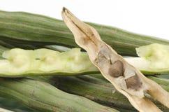 Świeży i wysuszony Horseradish drzewo, Drumstick (Moringa oleifera zwianie.). Zdjęcie Stock