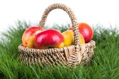 Świeży jabłko Obrazy Royalty Free