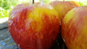 Świeży jabłko mokry na trawie zbiory wideo