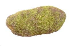 świeży jackfruit odizolowywający Zdjęcia Stock