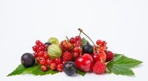 Świeży jagodowy żniwo Zdjęcia Stock
