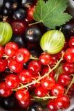 Świeży jagody owoc tło Obrazy Stock