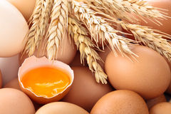 Świeży jajka tło Obraz Royalty Free