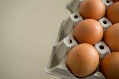 świeży jajko na panelu Obraz Stock