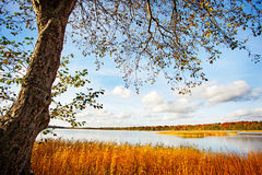 Świeży jasny jezioro Fotografia Royalty Free