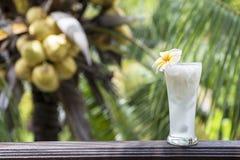 Świeży kokosowy sok w piwnym szkle Zdjęcia Stock