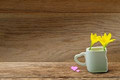 Świeży kolor żółty kwitnie w białej filiżance z kierowym kształtnym właściciela i menchii sercem na grunge drewnianym tabletop na Obraz Royalty Free