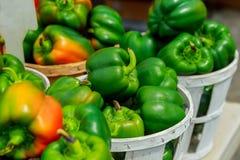 Świeży kolor żółty, pomarańcze, zieleń i czerwony organicznie dzwonkowych pieprzy capsicum na pokazie dla sprzedaży, Zdjęcia Royalty Free