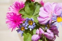 Świeży koloru set kwiaty Zdjęcie Stock