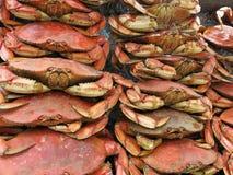 Świeży krab  zdjęcie royalty free