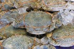 Świeży kraba morze Obraz Stock