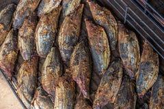 Świeży kucbarski katsuobushi - uwędzony skipjack tuńczyk Zdjęcie Royalty Free
