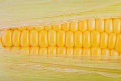 Świeży kukurudzy zbliżenie Zdjęcie Royalty Free