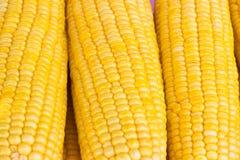 Świeży kukurydzany tło Obrazy Stock