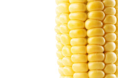 Świeży kukurydzany ucho odizolowywający na białym tle Zdjęcia Stock