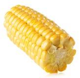 Świeży kukurydzany ucho odizolowywający na białym tle Zdjęcie Stock