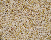 Świeży kukurydzany zbliżenie Obrazy Stock