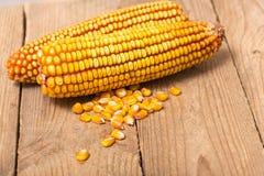 Świeży kukurydzany zbliżenie Zdjęcie Royalty Free