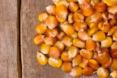 Świeży kukurydzany zbliżenie Obrazy Royalty Free