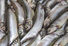 Świeży mały saltwater ryby zbliżenie obrazy stock