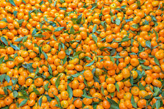Świeży mandarynki pomarańcze tło Zdjęcia Stock