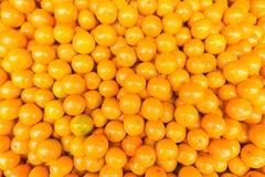 Świeży mandarynki pomarańcze tło Fotografia Stock