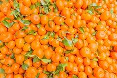 Świeży mandarynki pomarańcze tło Obrazy Stock