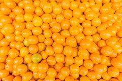 Świeży mandarynki pomarańcze tło Zdjęcie Stock