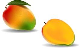Świeży mango na białym tle royalty ilustracja