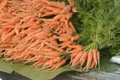 świeży marchewka ogród Zdjęcie Stock