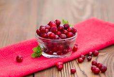 Świeży marznący cranberry Zdjęcia Stock