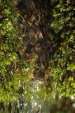 Świeży mech makro- Zdjęcia Royalty Free