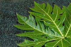 Świeży melonowa liść na czarnym granitu stole Tło, tekstura Obrazy Royalty Free